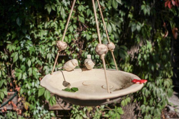 Vogeltränken